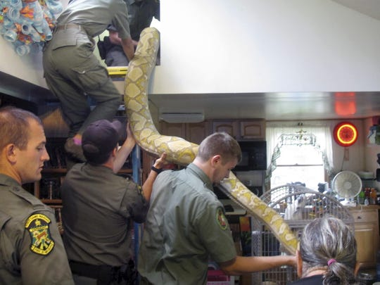 Vermont game wardens and snake experts from the Massachusetts-based Rainforest Reptile Shows remove an 18-foot, 220-pound reticulated python from the home of Pat Howard Tuesday in North Clarendon.