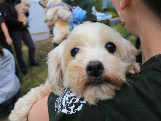 -HSI Canada Puppy Mill Rescue in Estrie, Quebec.JPEG-0749c.jpg_20140723.jpg