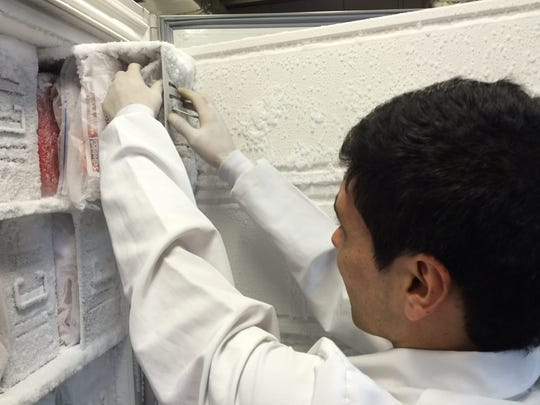 A University of Antioquia researcher handles samples at the university's brain bank. The bank includes samples from more than 200 brains donated by family members afflicted with the paisa mutation.