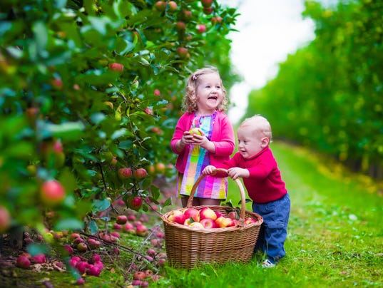 Kids in an apple orchard