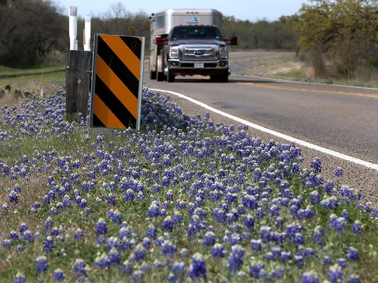 Bluebonnets make for a eye catching drive between Llano and Fredericksburg along State Highway 16, Saturday, March 24, 2018.