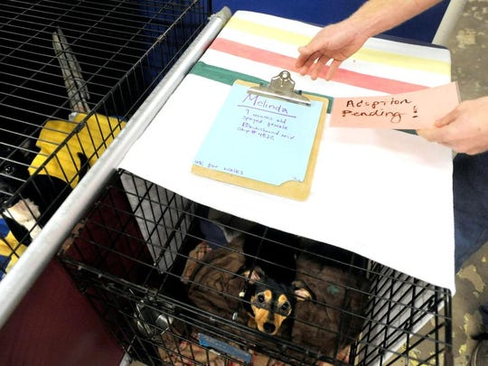 Adam Drillings of the Brother Wolf Animal Rescue slips an adoption notice onto a cage of a young dog on Tuesday.