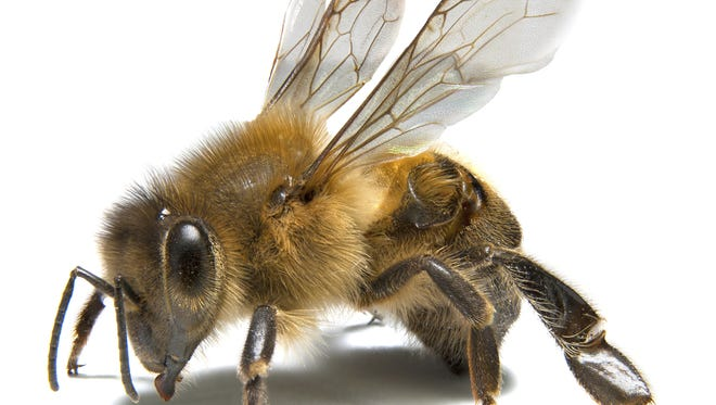 On Tuesday, beekeeper Keith Councell will lecture about Florida bees.