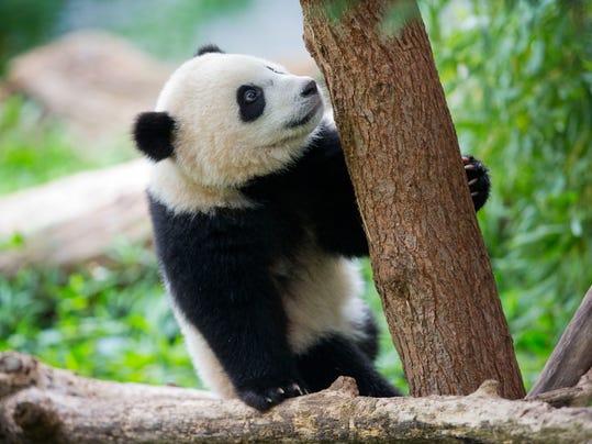 Panda Birthday_Oliv.jpg