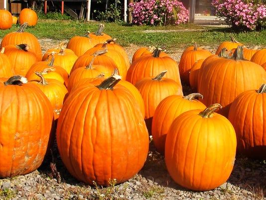 -ELMBrd_10-14-2013_Daily_1_A001~~2013~10~13~IMG_ELM_093013_pumpkins__1_1_DA5.jpg