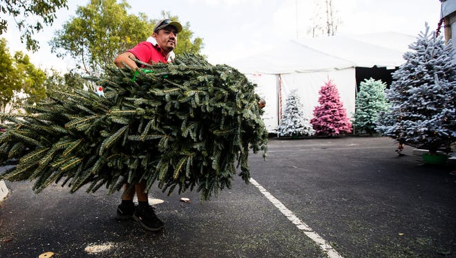Baudel Ramirez, an employee of Heath's Christmas Trees in Fort Myers prepares a Christmas tree for a customer on Tuesday 11/28/2017.