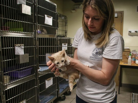 Animal Control Officer Kristin Padden holds one of the kittens removed from an Iselin home, at the Woodbridge Township Animal Shelter on June 29, 2016.