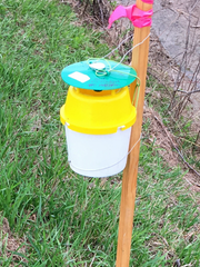 A bucket trap such as this can be used to monitor insect populations of a number of species.