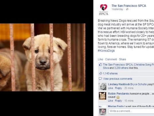 San Francisco Dog Rescue Small Dogs