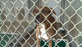 It's a numbers game at the Gaston County animal shelter.
