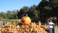 Uncle Ray's Pumpkin Patch