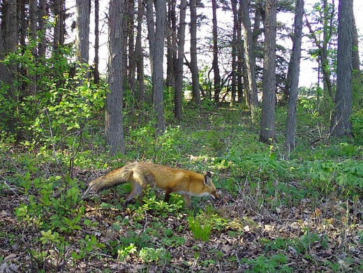 Paul Brown Dodge >> Paul A. Smith: Snapshot Wisconsin trail cam project poised to go statewide