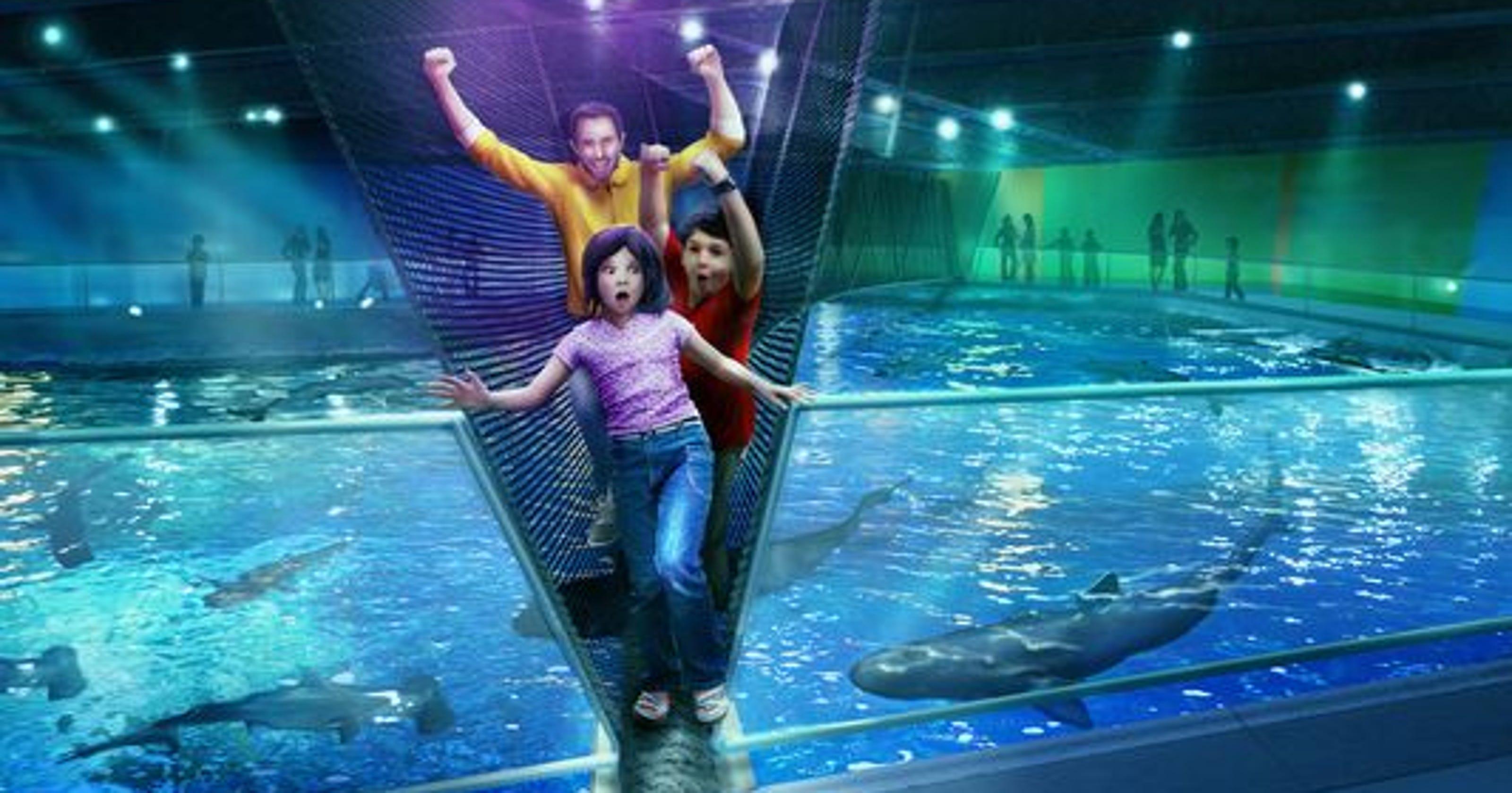 Bridge over shark tank opens at Newport Aquarium