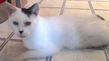 kaseys-cat1219