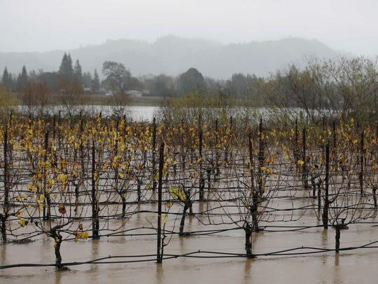 A vineyard is flooded along Highway 101 Thursday, Dec. 11, 2014, in Windsor, Calif., as a powerful storm churned through Northern California Thursday, knocking out power to tens of thousands and delaying commuters while soaking the region with much-needed rain. (AP Photo/Eric Risberg)