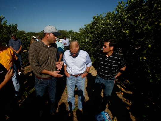 U.S. Sens. Bill Nelson, center, and Marco Rubio, right, tour the Story Grove orange grove where large numbers of oranges sit on the ground in the wake of Hurricane Irma on September 13, in Lake Wales, Florida.