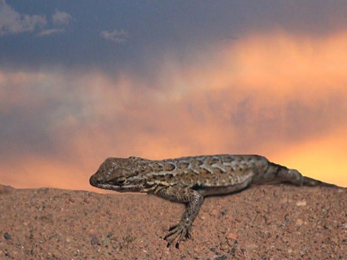 Image result for arizona summer