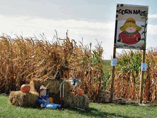 The entrance to the corn maze at Uncle Bill's Farm