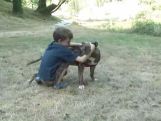 Pitbull saves kid