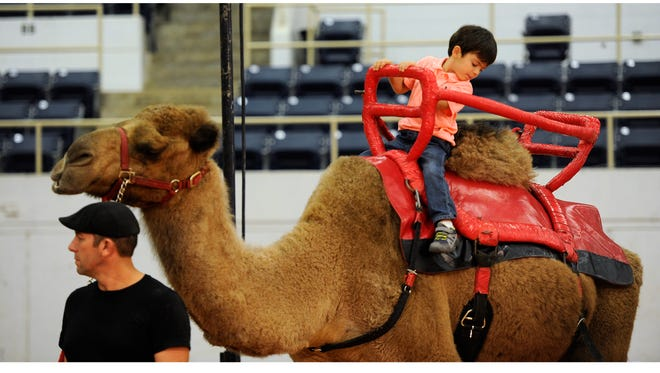Tyson Armstrong, 4, rides a camel before the Shrine Circus show on Tuesday at the Taylor County Coliseum.
