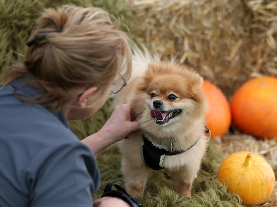 Terri Jacobson of Terri Jacobson Photography gets to know Penny, a Pomeranian who was adopted from Marion County Dog Shelter, before photographing her at the shelter's 10th Anniversary Celebration and Open House on Saturday, Oct. 8, 2016,  in Salem.