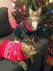 Catie Savage's cats Lambchop, below, and Ziggy are both dressed in their finest ugly Christmas sweaters in her apartment in New York. Ugly sweaters aren't just a Christmas tradition for people. Cats, dogs and even guinea pigs are joining the party.