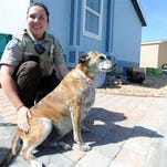 Deidra Jesmer, a community service technician with the Evans Police Department, sits next to Tanka, a mixed breed, while at Tanka's home in Evans. Jesmer worked with fire crews to rescue Tanka, who had been trapped beneath a home after having been missing for four days. Below, Tanka investigates the camera as Jesmer and Mike Linn, Tanka's owner, look on during a visit to Linn's home Wednesday in Evans.