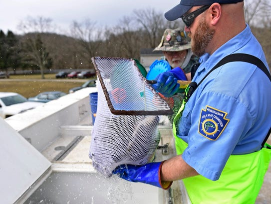 Stocked trout numbers stable in pa amidst threat of for Pa fish stocking