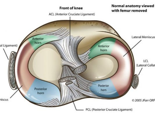 The Injury Zone Basic Anatomy And Function Of The Meniscus