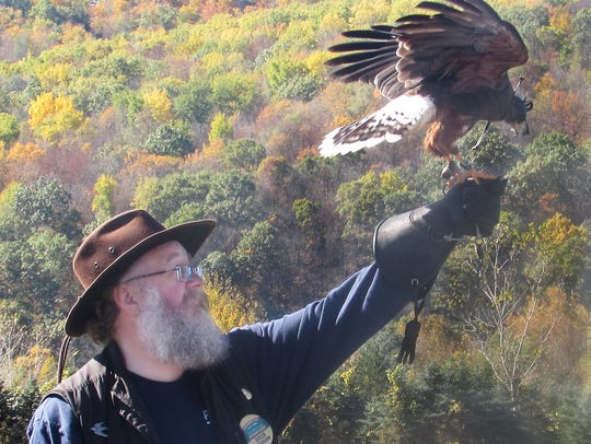 A raptor from Morgan Eagle Falconry performs for the