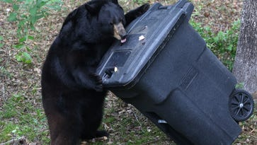 Bear trash can funding available in June