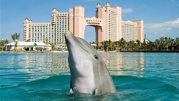 Home to Atlantic Bottlenose dolphins, Dolphin Cay sits
