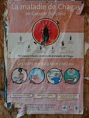 The Centers for Disease Control estimates 8-10 million people are infected with Chagas worldwide, and 300,000 live in the United States.