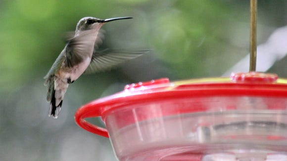 Hummingbird feeders may attract bees looking for a sweet snack.
