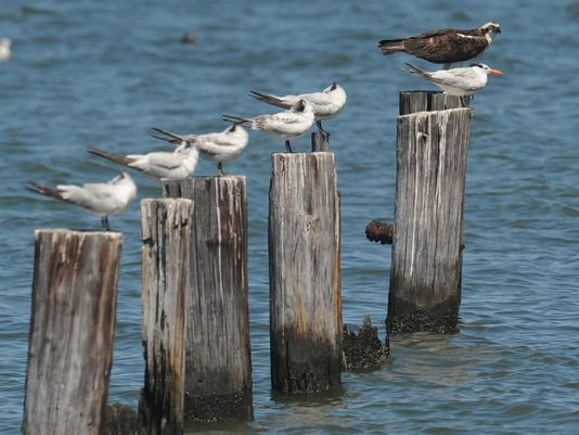 birds on posts.jpg