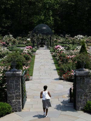 The Peggy Rockefeller Rose Garden at the New York Botanical Garden is one of the Bronx's most beautiful attractions.