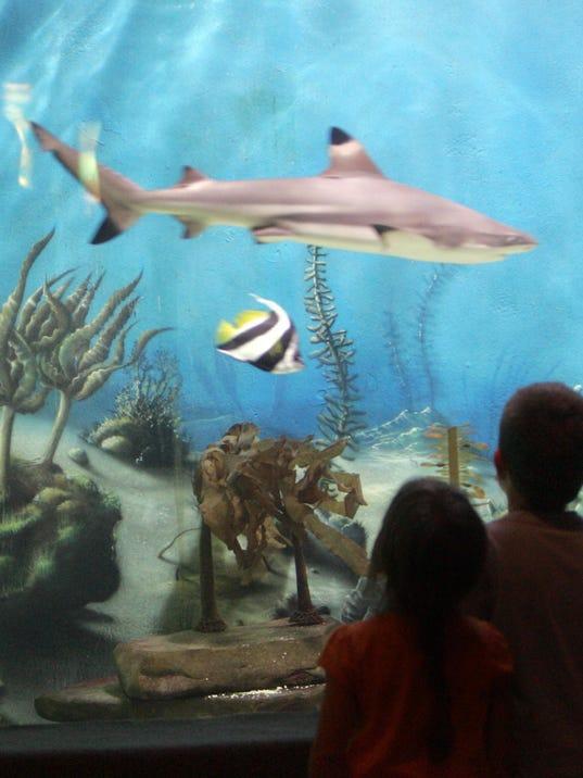 Jenkinson 39 S Aquarium Brings Ocean Indoors