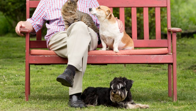 Treating and preventing pet allergies.