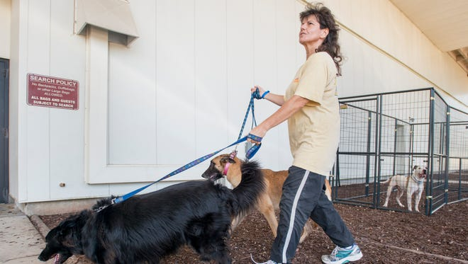 Michelle McShane, of West Palm Beach, Florida, walks two of her 11 dogs outside of the Hurricane Irma evacuation shelter at the Bay Center in Pensacola on Wednesday, September 13, 2017.