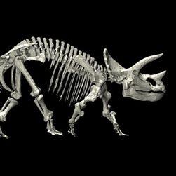 New study shakes up the dinosaur family tree