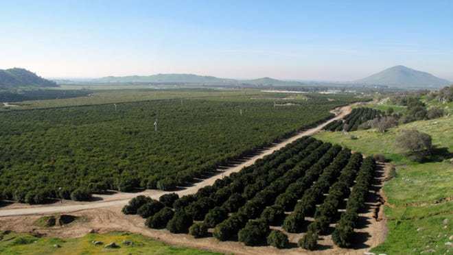 This Feb. 5, 2016, photograph shows citrus groves east of Fresno, California. A newly released state report shows California farmers reaping record sales of $53.5 billion in 2014, the same year Gov. Jerry Brown declared the state in a drought emergency and launched what became mandatory conservation for cities and towns. (AP Photo/Scott Smith)