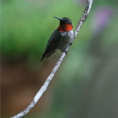 Answer Man: Hummingbirds, bees MIA this year?