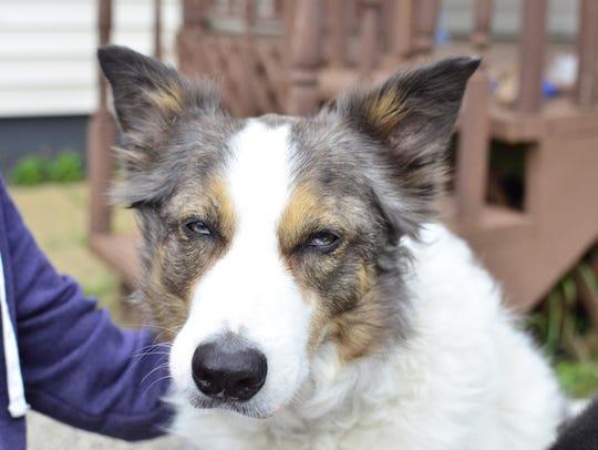 Melanie Jannery's service dog, Winston, has helped