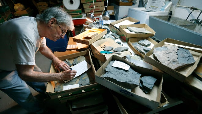 Amateur geologist Sam Ciurca takes notes in the basement of his Irondequoit home of some of his fossil findings he donated to the Ithaca Museum of the Earth.