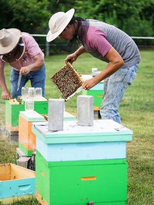 West Virginia beekeepers tend to one of the 850 hives being maintained throughout the Mountain State and Commonwealth of Virginia.