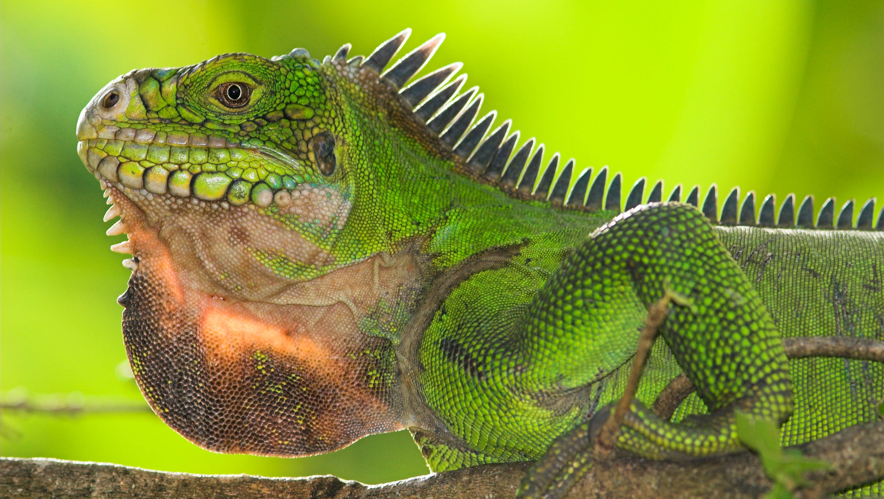 The lizard brain endangers democracy | Ben Carter