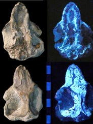 CT scanning of a 130-million-year-old fossil allowed