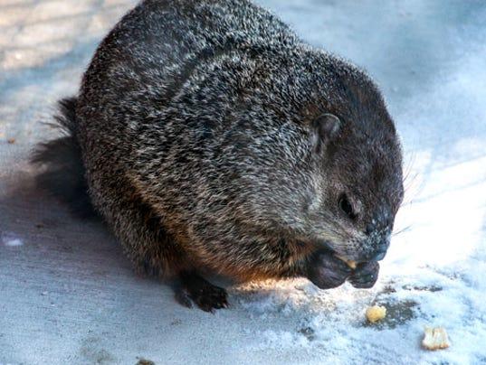 Groundhog-day-2-2-14--64-.jpg