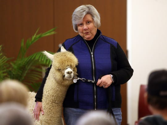 Joy Scott talks about her 7-month-old alpaca named 'Hamish.' Joy and husband Colin of Highland Alpaca Ranch brought their alpaca to the Parsippany Public Library who hosted 'Live from NJ: Alpacas!' for an adults-only program. January 6, 2017, Parsippany, NJ.