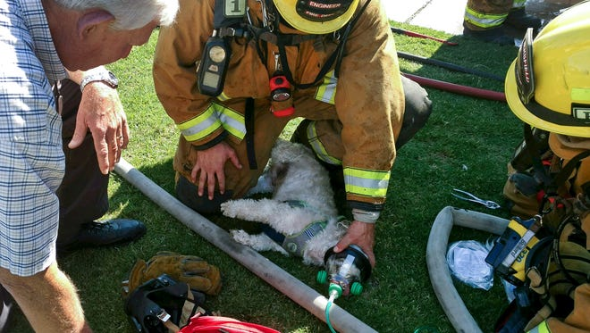 "In this photo provided by Bakersfield Fire Department shows firefighters resuscitating a Shih Tzu dog, named ""Jack,"" after pulling him from a burning home, Friday, July 21, 2017, in Bakersfield, Calif. Using a pet oxygen mask donated to the department by a local Girl Scout troop, firefighters slowly bring Jack back to life."